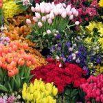 Você planta flores?