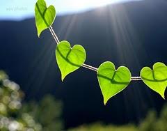 love folhas